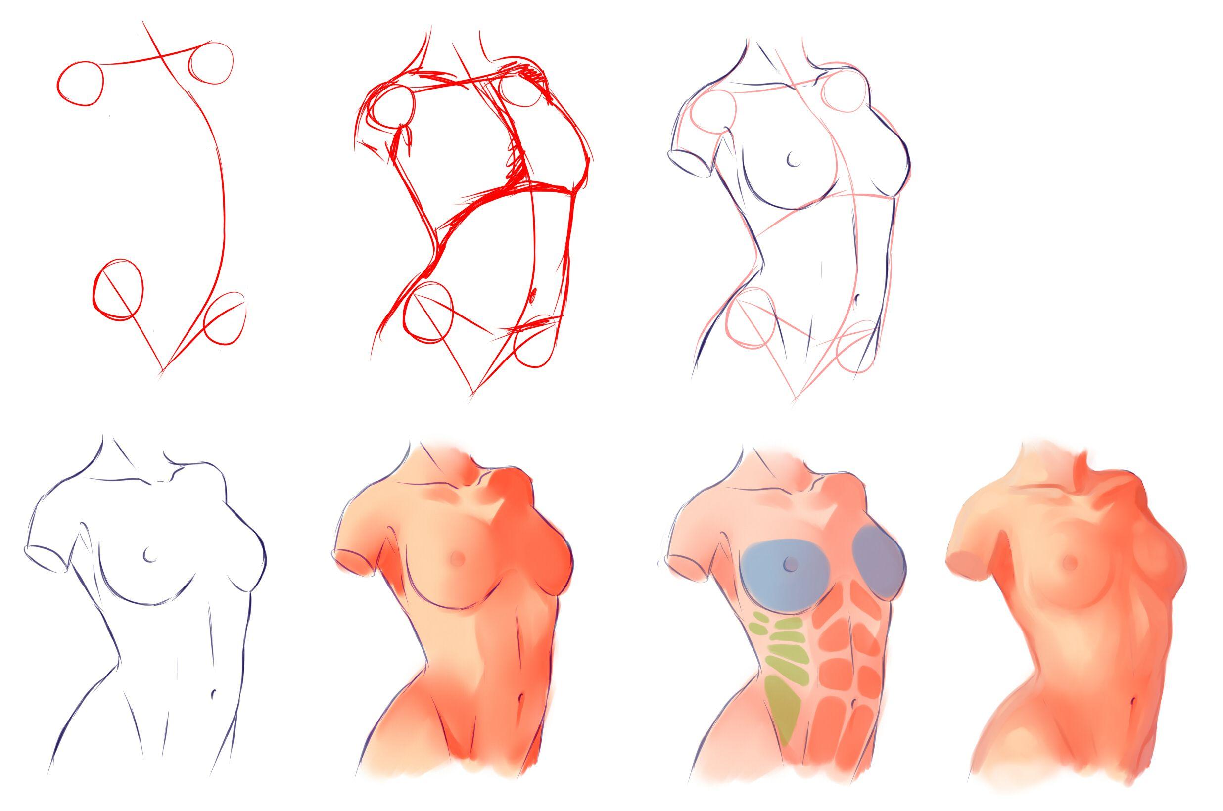 动漫人物人体结构图