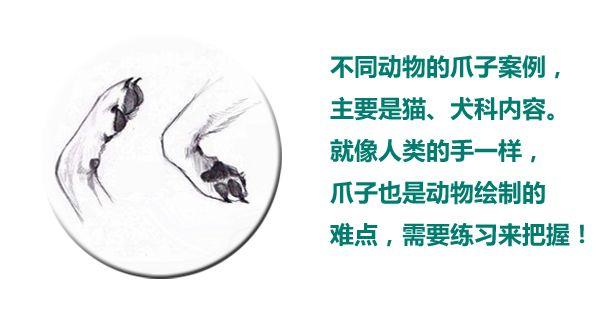 动物爪子logo'