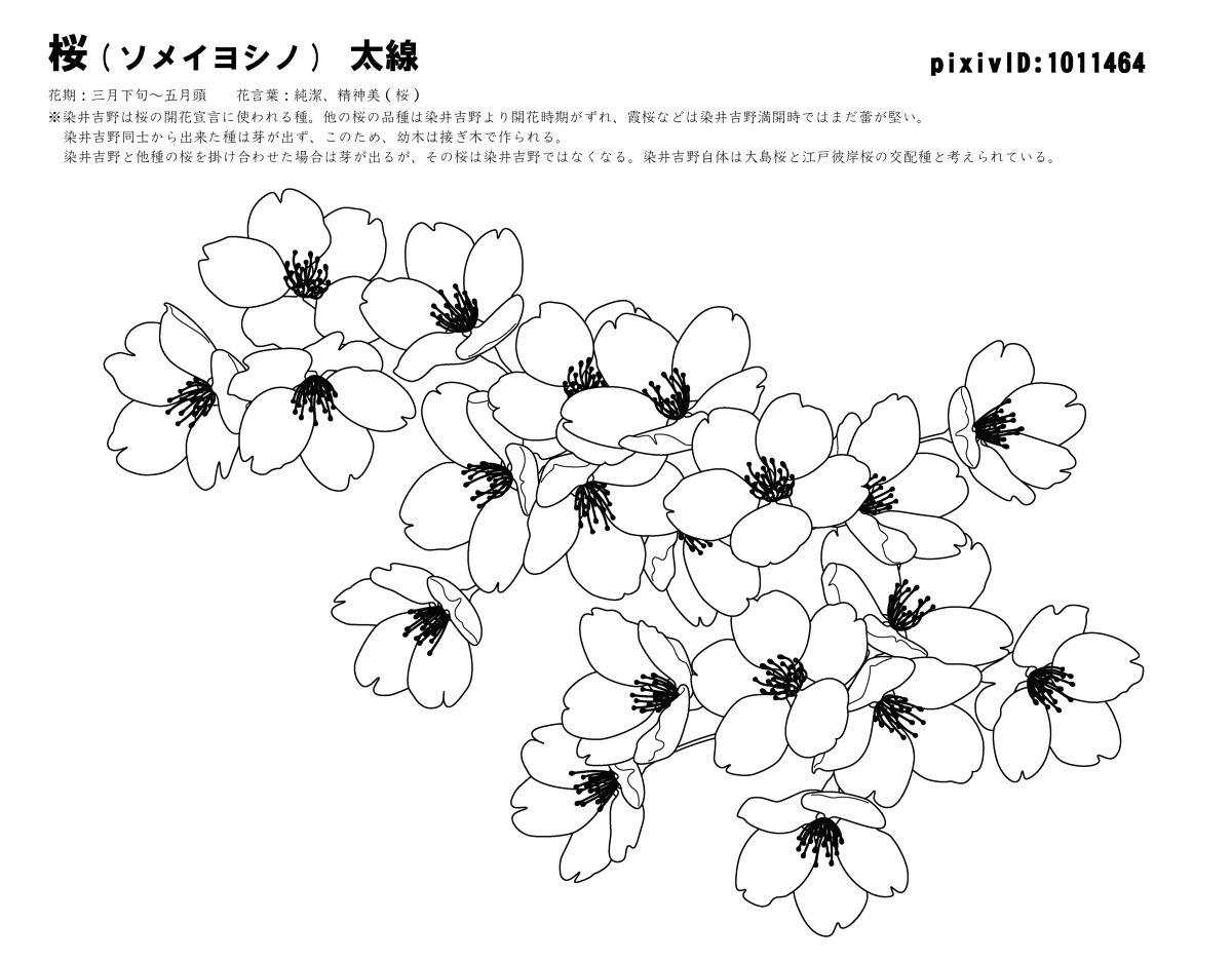 手绘樱花花瓣素材
